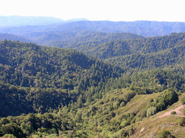 View of San Lorenzo River Valley