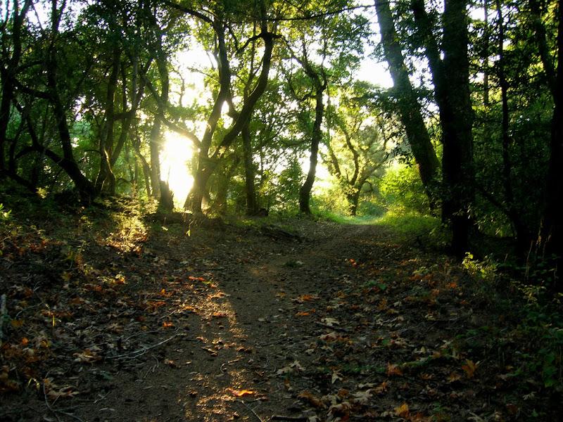 Beautiful scene on the Mindego Trail