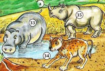 33. hipopótamo 34. hiena 35. rhinoceronte a. Cuerno