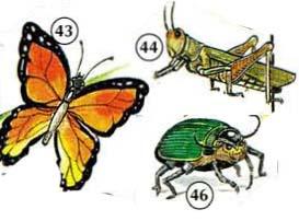 43. butterfly 44. grasshopper 46. beetle