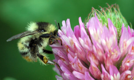 Precipitous decline in bee population continues