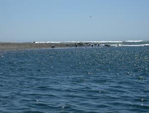 Harris Beach Day 2 (49)