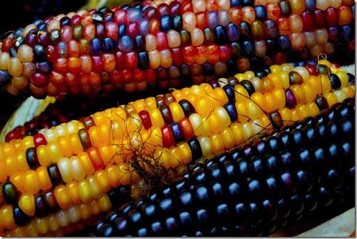 photoshare Fall Indian Corn Marietta NY cherriobin