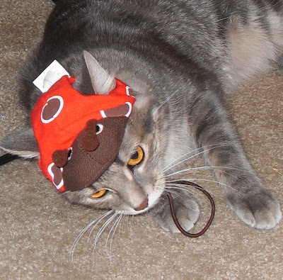 Kitty with ladybug cat-hat