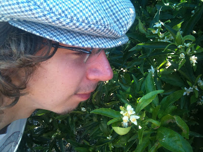 Me sniffing a lemon blossom
