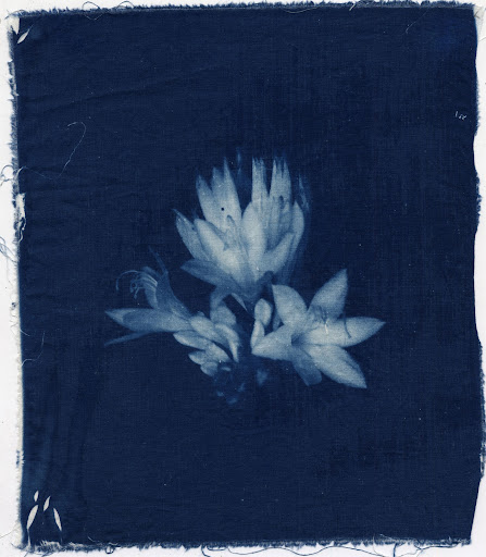 Cyanotype on Cotton