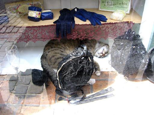 Gent cat