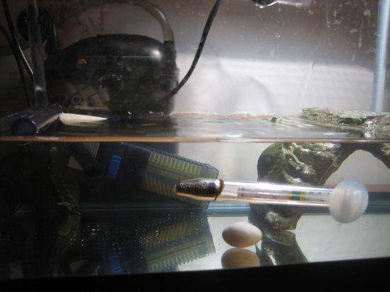 small aquarium for small pet turtles