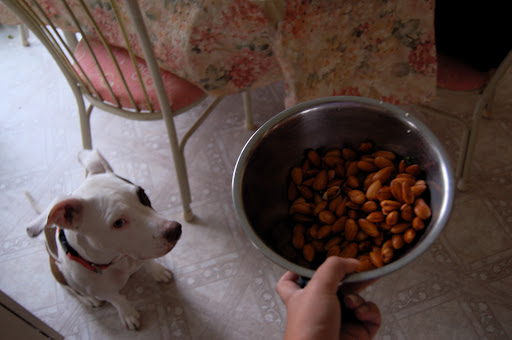 Almonds Soak. Mookie Waits