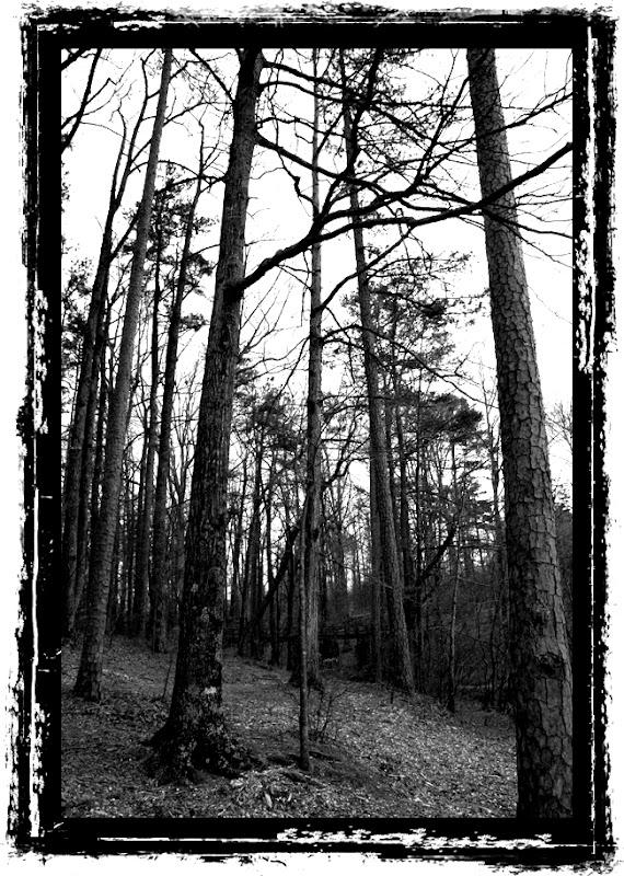 paris mountain trees ansel adams style black white photoblog whims