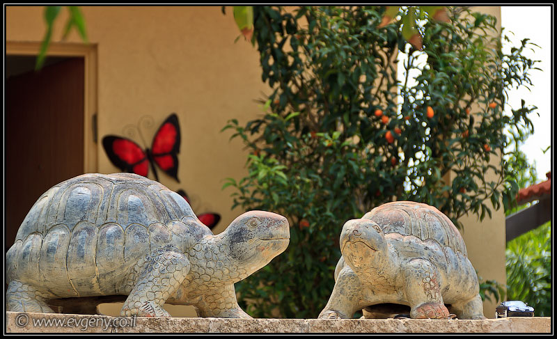 Одно фото / Израиль, Тель Монд