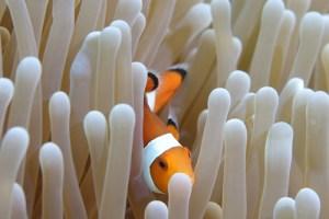 Snorkeling dengan Nemo