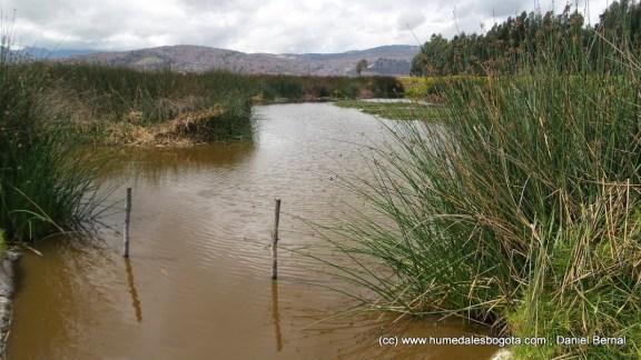 Espejo de agua sobreviviente del humedal Tibanica