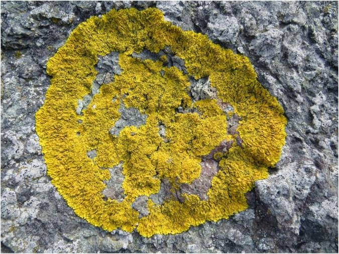 Lichens near Primorsko