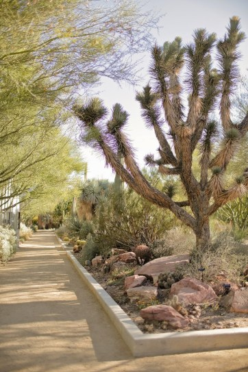 The Springs Preserve Las Vegas.