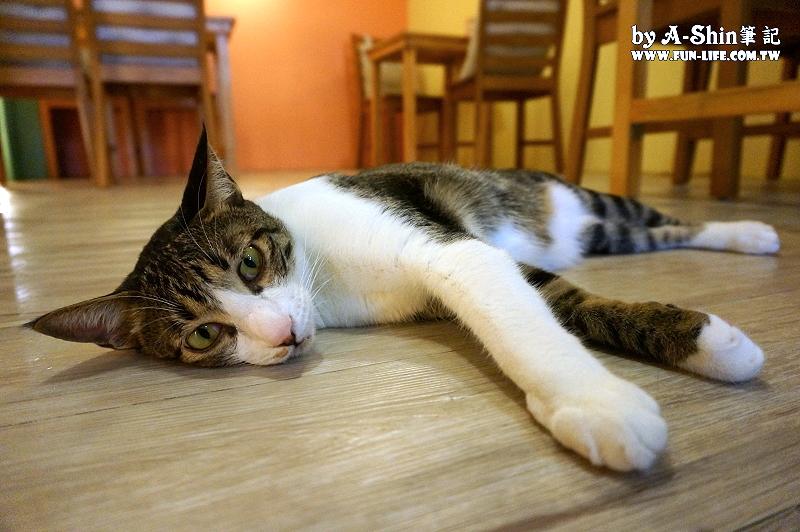這裡有貓輕食屋5