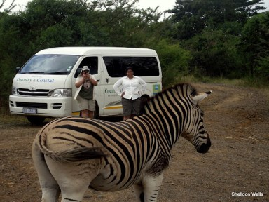 Zebra Posing at Mpila Camp