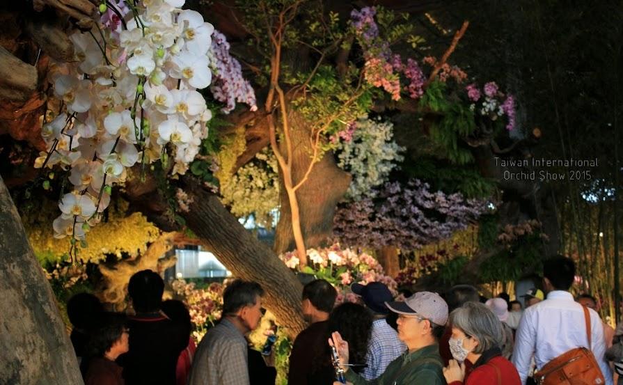 2015 台灣國際蘭展