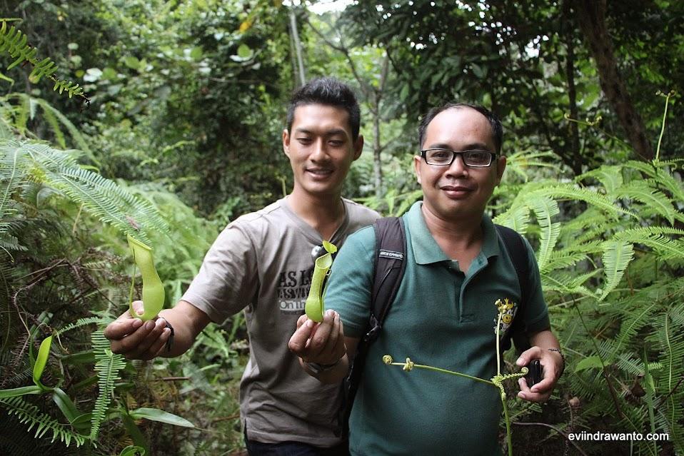 Kantong Semar - Nephentes di Taman Nasional Bukit Barisan Selatan