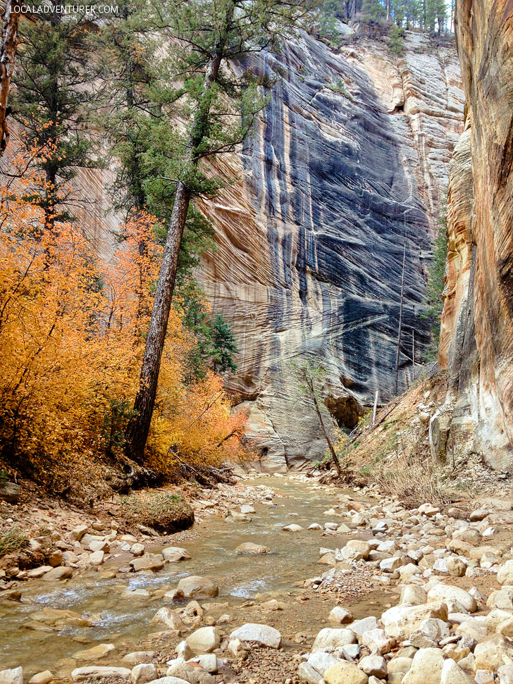 {Photo Guide} Hiking the Narrows Zion National Park Day 1.