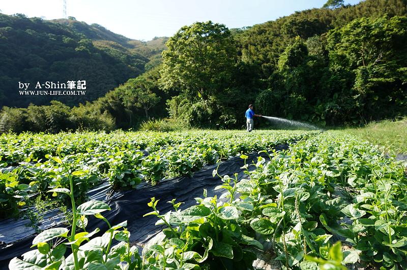碧蘿村有機休閒農場2