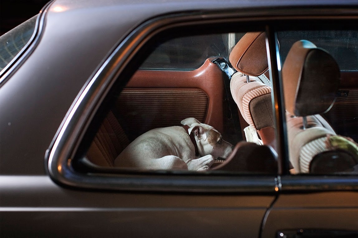 *被鎖在車內沉默的狗:攝影師Martin Usborne 黑暗呈現! 9