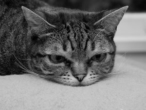 discouraged rough week tired cat worn out ministry leadership leaders