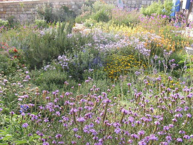 מראה כללי לגינה