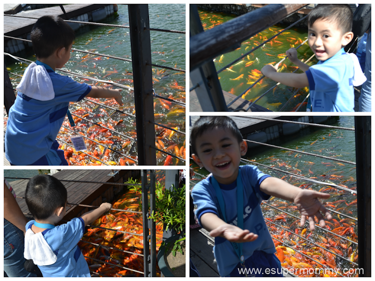 Fish feeding at Nuvali