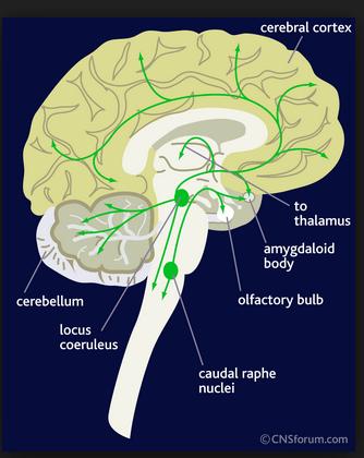 神經路徑(neural pathways) - 小小整理網站 Smallcollation