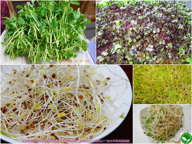 亞麻仁子吃法 多吃亞麻仁籽..等有機培育成的芽菜,可有效提升抗氧化能力 ...亞麻木酚素,亞麻子,亞麻子粉 ...