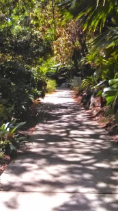 path surrounded by greenery
