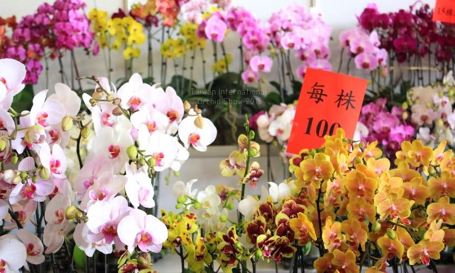 2015 台灣國際蘭花展時間-8