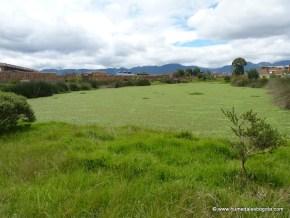 Espejo de Agua cubierto por Buchón, Humedal La Vaca