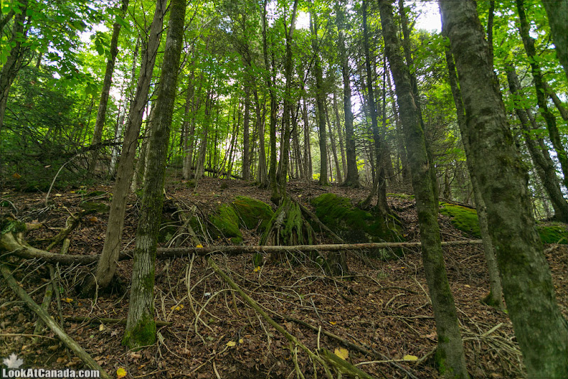 LookAtCanada.com / Сказки канадского леса