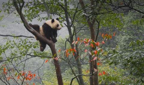 Cara Menghadapi Update Algoritma Google Panda