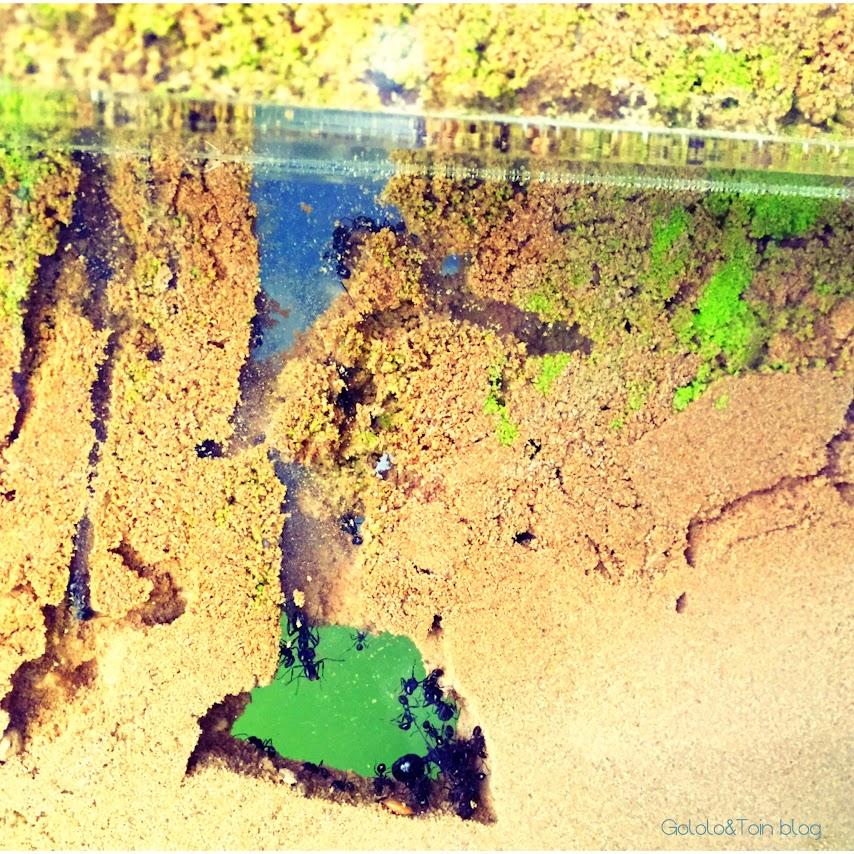 hormiguero-artificial-regalo-hormigas-trabajo-niños-galerias-arena