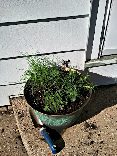 2herb planting, phase 1: chives, rosemary, oregano