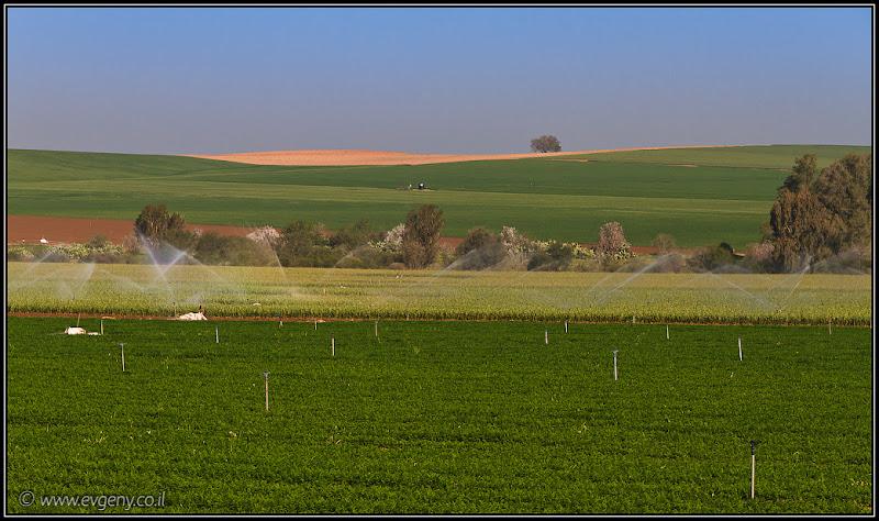 Одно фото / Пустыня Негев