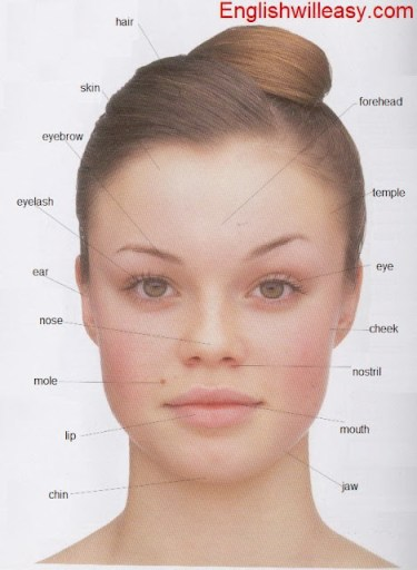 Human Body Parts Pictures with Names  Body Parts Vocabulary: Leg, Head, Face,