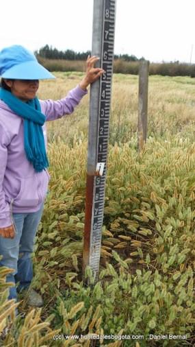 Mira de medición, rodeada de plantas y tierra seca
