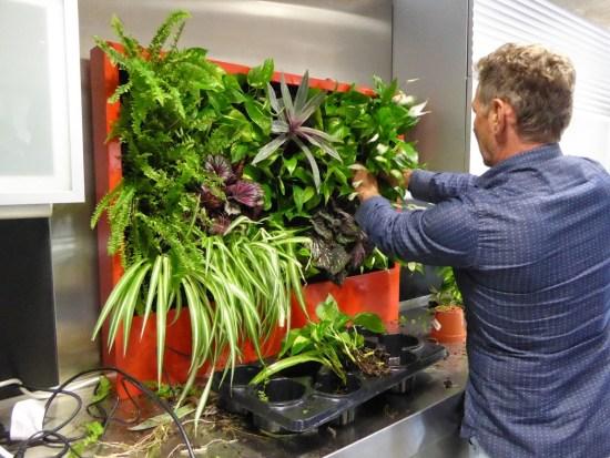 Curso de jardinería vertical