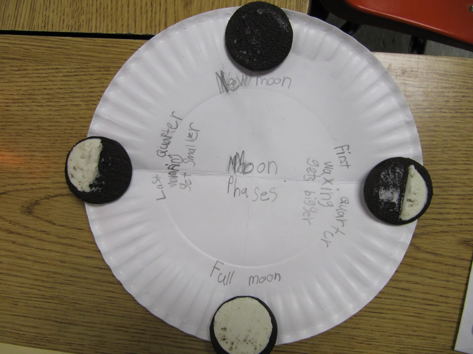Mrs Samuelson S Swamp Frogs Phases Of The Moon