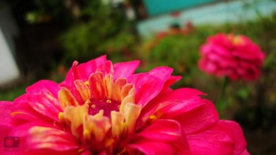 weekly photo challenge: spring by yori yuliandra