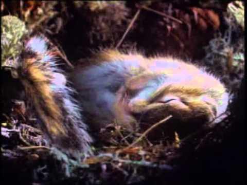 виолонкело: география картинки животные и растения тайги
