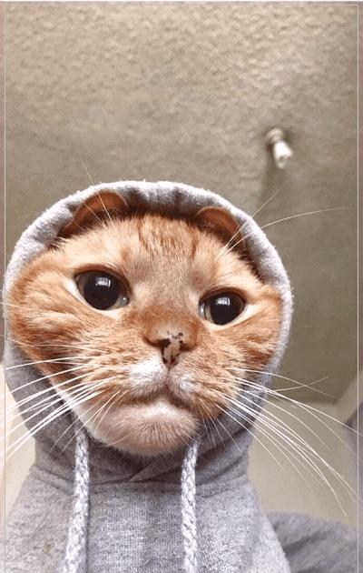 Foto profil wa keren tentunya dapat membuat tampilan akun whatsapp kamu terlihat aesthetic dan kece di mata pengguna lain saat chattingan. Foto Kucing Aesthetic Lucu Kicau Sejati