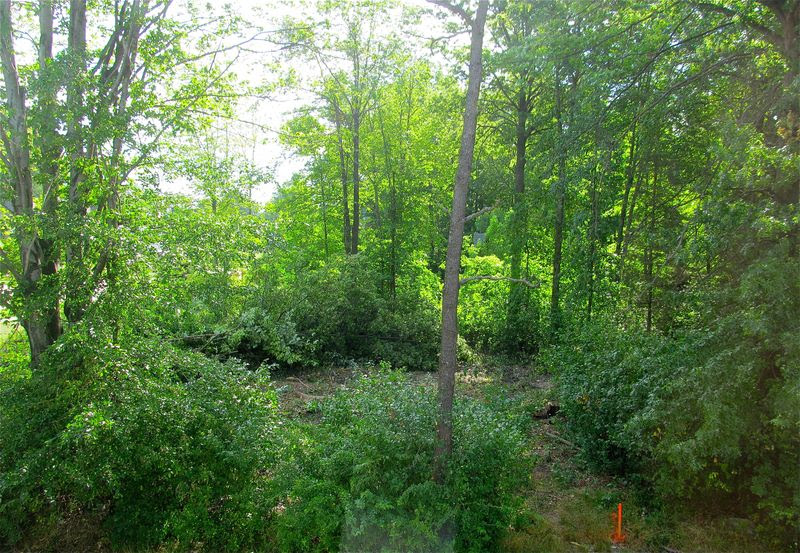 Garden Ideas For Wooded Areas   Architecture Decorating Ideas on Wooded Backyard Ideas id=74736