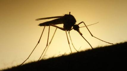 mosquito project