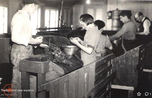 usine de traitement des oursins Saint-Pierre et Miquelon