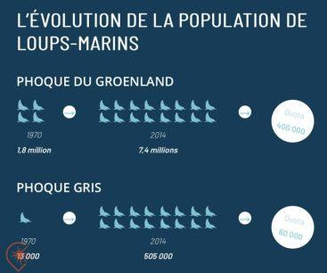 evolution de la population de loups-marins